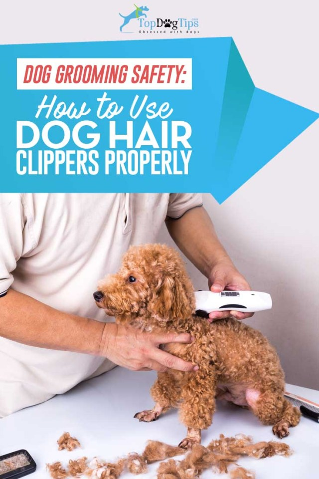 How To Use Dog Clippers Video