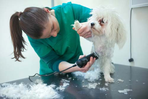 How to Train a Dog to Enjoy Grooming