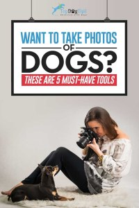 Must-Have Dog Photography Tools for Dog Photographers
