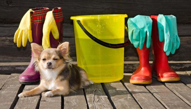 Pet-friendly dog cleaning products