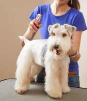 Pet perfume for dogs - really