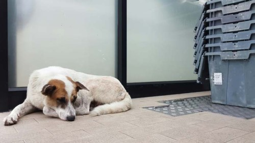 Stone Tile Flooring for Dogs