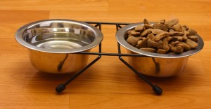 Ceramic dog food bowl vs stainless steel dog food bowl