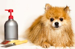 The Best Dog Conditioner Brands for a Shiny and Tangle-Free Coat