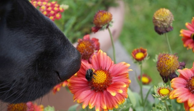 Bee Products for Dogs