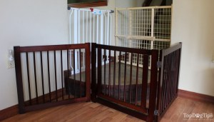 Testing and Reviewing Best Dog Gates Indoor and Outdoor