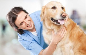 Best Tips from Vets on Dog Food and How to Feed Dogs