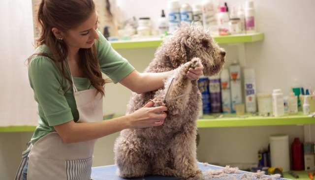 Cyber Monday Deals on Dog Supplies