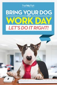 How to Take Your Dog to Work Day