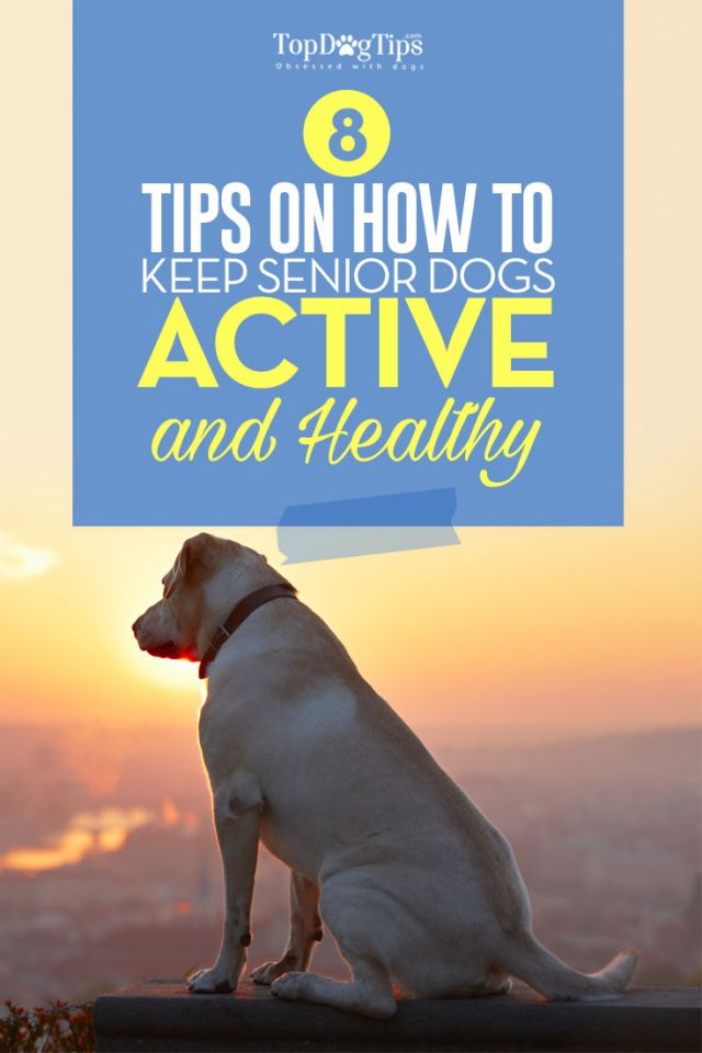 Tips for Keeping Your Senior Dog Active