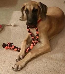 Duke's Digs Tug of War Dog Chew Toy