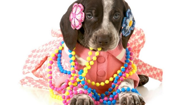 Best Female Dog Names & How To Pick A Name For A Female Dog