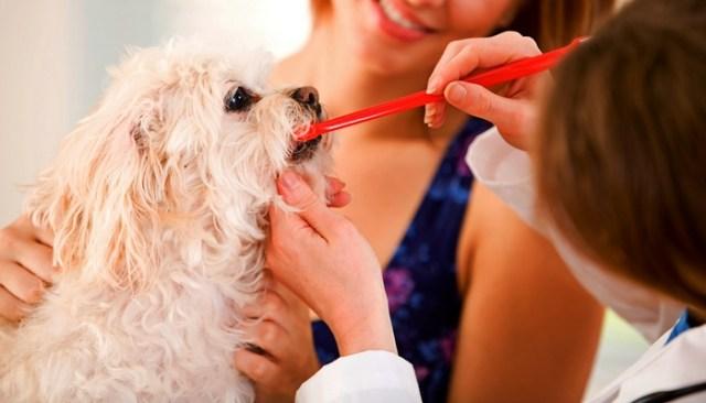 Checklist for Dog Teeth Brushing