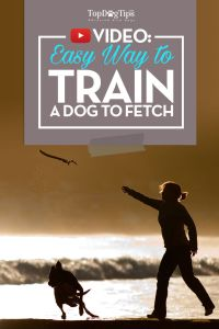 How To Train A Dog To Fetch Video