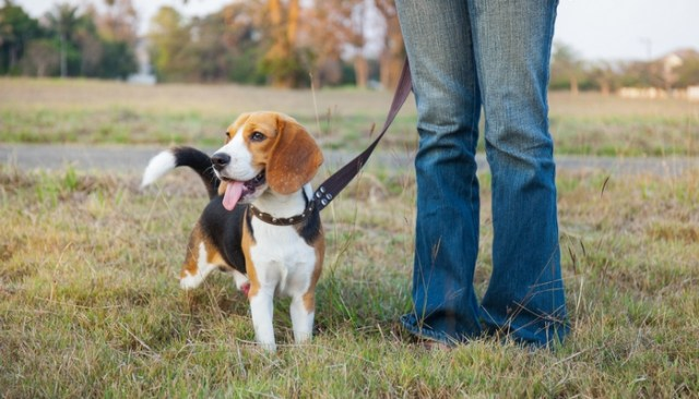 How To Train A Dog To Stay In the Yard