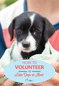 How to Volunteer To Help Dogs