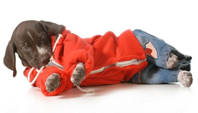 dog photography tips