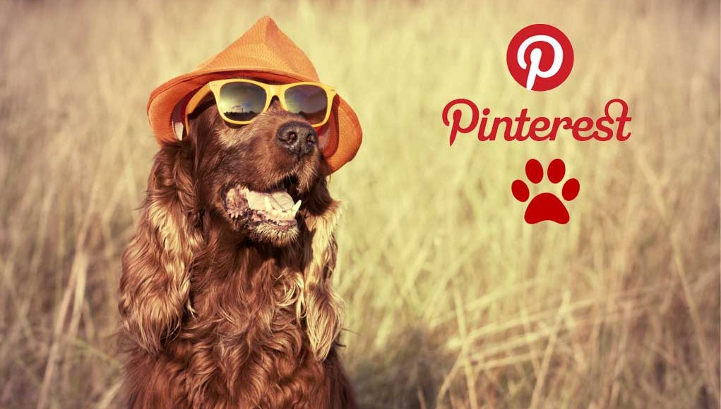 Best Pinterest Pages for Dog Owners Today