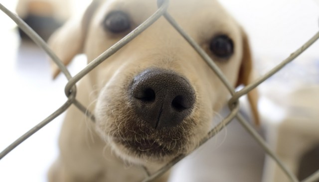 Checklist for Adopting a New Dog or Puppy