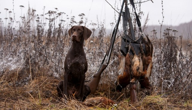 Perform an after-hunt check on a dog