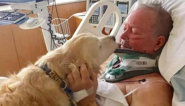 Dog Saves Owner's Life by Keeping Him Warm and Calling for Help