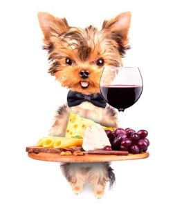 French yorkie dog serving food