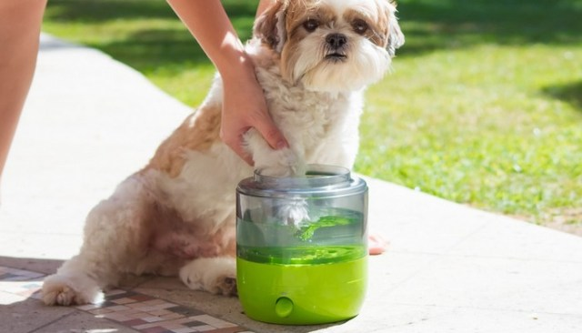 Introducing EasyPaw, the World's First Automatic Paw Washer