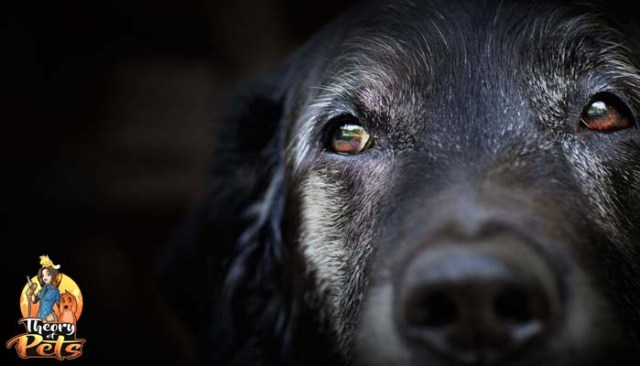 Reasons to Adopt Senior Dogs