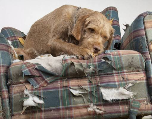 Stop Dog from Chewing Furniture and Belongings