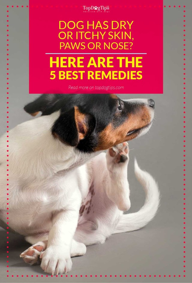 Top Rated Remedies for Dog Dry Itchy Skin