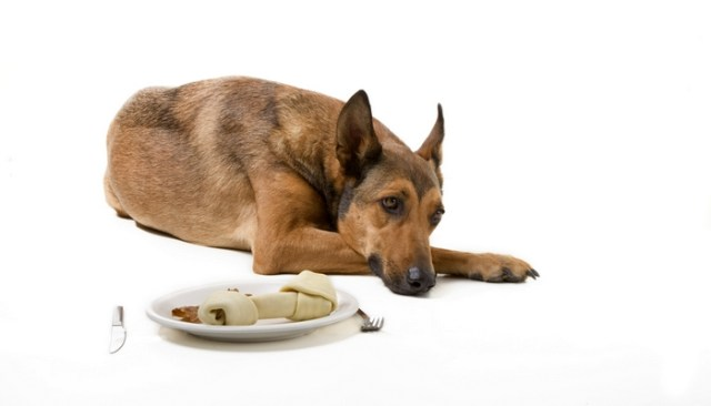 how to get a dog with no appetite to eat