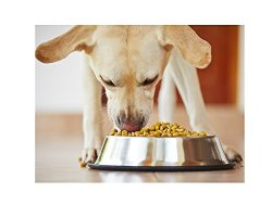 GPET 16-Ounce Stainless Steel Dog Bowl with Rubber Base