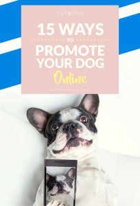 Best Ways To Promote Your Dog Online