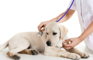 Canine Flu Shuts Down Major Chicago Shelter – But a New Vaccine Has Been Developed