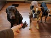 Dehydrated Chicken Liver Dog Treats Recipe