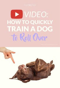 How To Train A Dog To Roll Over