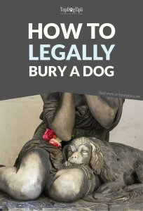 How to Bury a Dog Legally