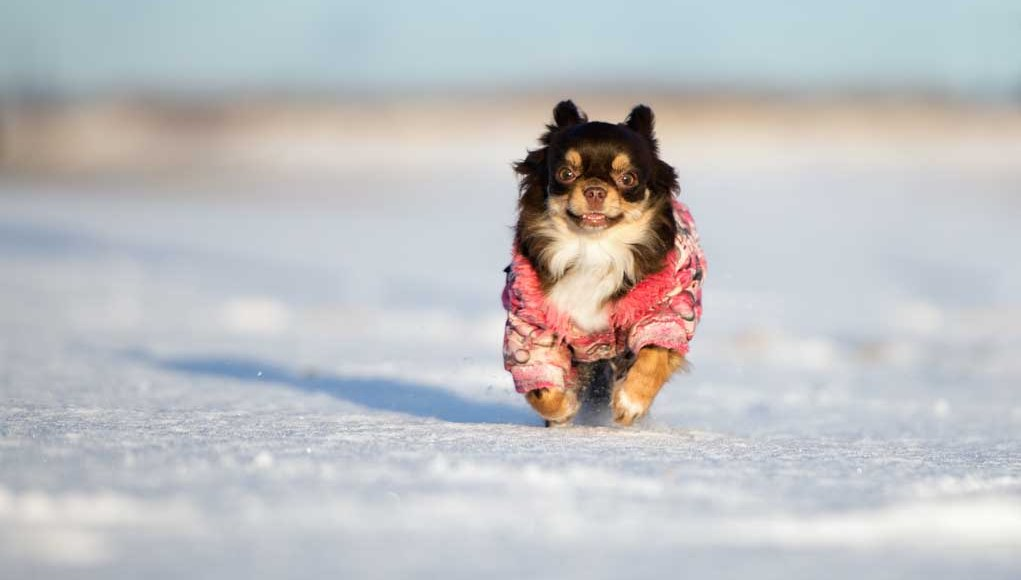 How to pick best dog clothes and footwear for dogs