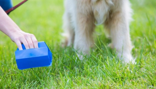 Most Profitable Pet Business Ventures to Start Today