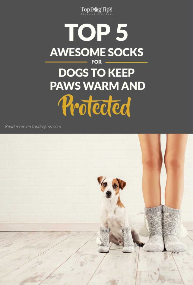 My 5 Favorite Socks for Dogs