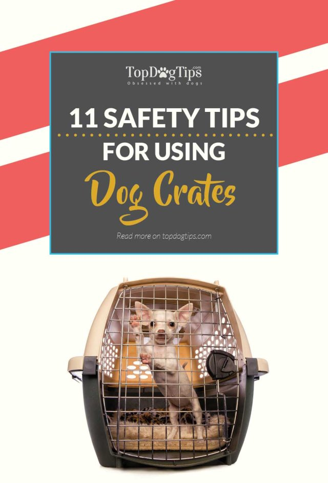 Tips on How to Use Dog Crates Safely