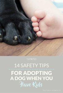 Top Safety Tips for Adopting a Dog When You Have Kids