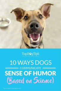 Ways Dogs Communicate Their Sense of Humor According to Science
