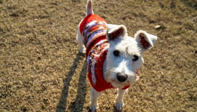 tips for picking the best dog clothes and footwear