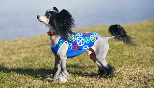 Why pet clothes are important for the health of a dog