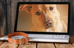 15 Most Influential Pets On the Internet