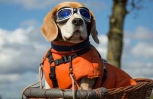 Best Dog Sunglasses
