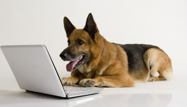 Best YouTube Channel for Dog Lovers