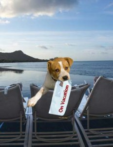 Dog friendly hotels restaurants and other places