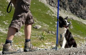 How To Prepare To Go Hiking with Dogs